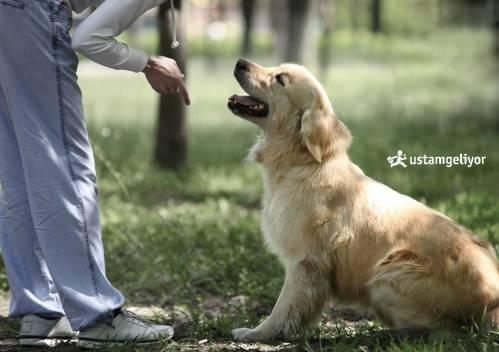 köpek eğitimi ustamgeliyor.jpg