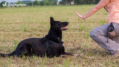 köpek eğitimleri ustamgeliyor.jpg
