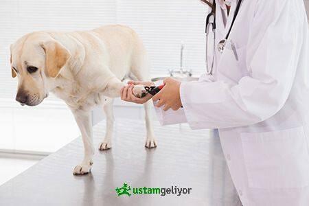veteriner polikliniği.jpg