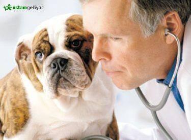 veteriner poliklinikleri nerede ustamgeliyor.jpg