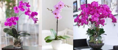 orkide-bakımı.jpg